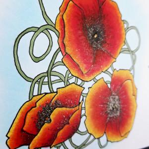 blog poppy 5